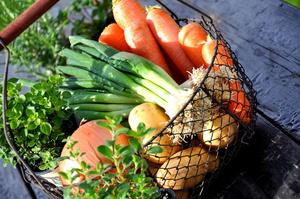 ganzheitlich, ganzheitliche Medizin, komplementär, natürlich, Ernährung, integrative Medizin, Obst, Gemüse, Salat, gesund, Fisch, Omega-3, Übergewicht, Diabetes, Krebs, Herz-Kreislauf