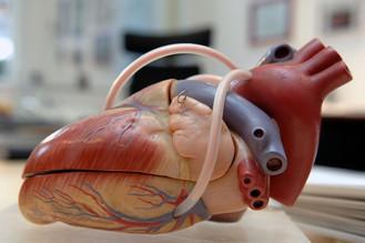 Herz, Herzfunktion, Forschung, KHK, Medikamenten, Gesundheit, ganzheitlich, ganzheitliche Medizin, komplementär, natürlich, integrative Medizin, natürliche Medizin, Kompetenz, Menschlichkeit