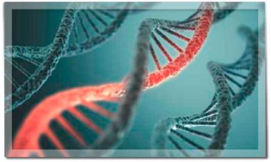 Prof. Dr. Friedrich Hagenmüller, Darmkrebs, Vorsorge, Koloskopie, Polypen, Darmspiegelung, Genetik, familiär, Reichelt, Medizin für Menschen