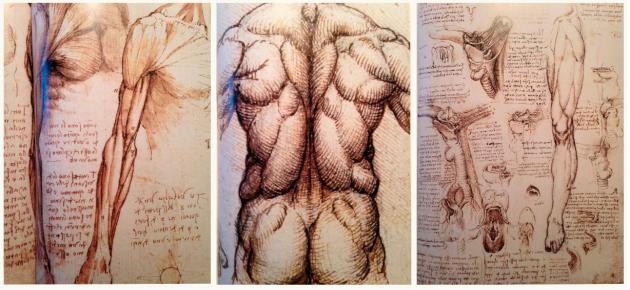 Leonardo da Vinci, Anatomie, Zeichnungen, LNB, Roland Liebscher-Bracht, Schmerzteherapie, LNB, Mechanik, Reichelt, Medizin für Menschen,