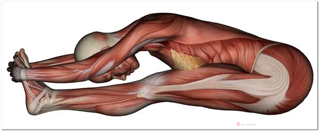 LNB, Liebscher-Bracht, Schmerztherapie, Faszien, Muskeln, Petra Bracht, Roland Liebscher-Brachtt. Reichelt, Medizin für Menschen, Rücken, Gelenke, Verletzungen, LNB-Motion