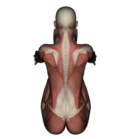 LNB, Liebscher-Bracht, Schmerztherapie, Faszien, Muskeln, Schmerzen, Wirbelsäule, Gelenke, Verkürzung,